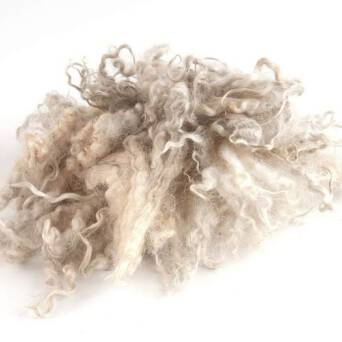 Natral wool locks white unwashed
